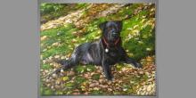 Black dog, maľovaný obraz ručne