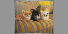 Čivava na gauči, obraz  je maľovaný ručne