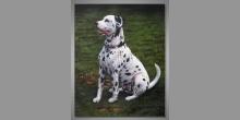 Dalmatín, obraz ručne maľovaný