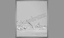 Digitálne tlačený obraz, Kŕdeľ vtákov