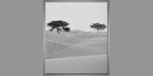 Stromy na púšti, digitálne tlačený obraz